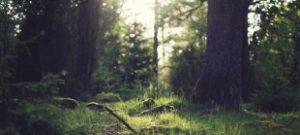 Voordelen mindfulness